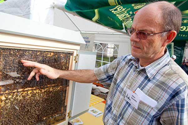 Halten Bienen Winterschlaf Melibokus Rundblick